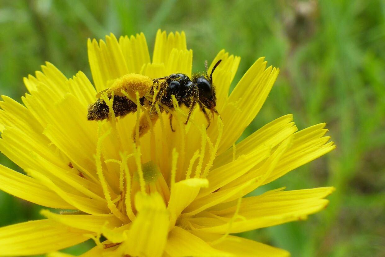 Nachhaltigkeitswoche: Die Biene bei SugarShape!